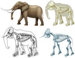 Elefant och dess kropp vektor