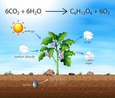En process av träd producerar syre