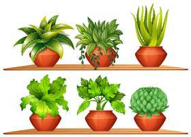 Olika typer av växter i krukor