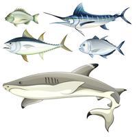 Fische vektor