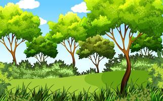 grön utomhusparkscen