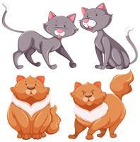 Sats av söta katter tunna och feta