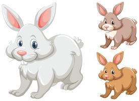 Kaniner med tre olika färger vektor