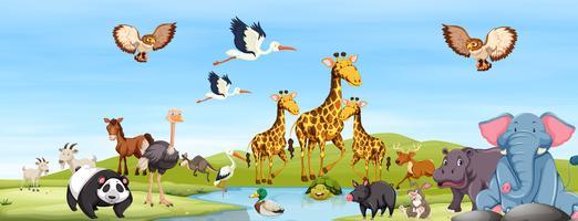Lyckliga djur i naturen