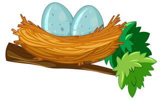 Zwei Eier im Nest