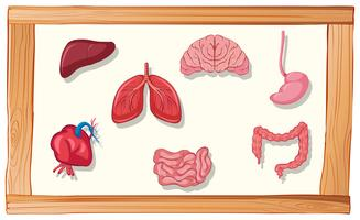 Menschliche Organe im Holzrahmen