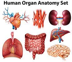 Anatomie vektor