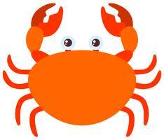 Orange Krabbe auf weißem Hintergrund vektor