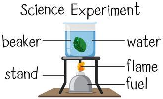 Wissenschaftsexperiment mit kochendem Blatt