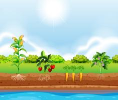 En uppsättning växter växande