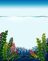 Eine schöne Unterwasserschablone