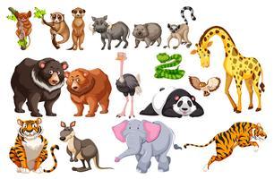 En uppsättning av vilda djur på vit bakgrund