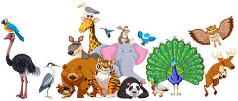 Wilde Tiere stehen in der Gruppe vektor