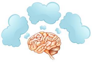 Menschliches Gehirn und drei Sprechblasen