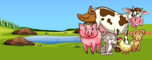 Många typer av djur på gården