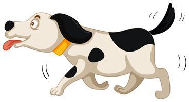 Hunden körs på vit bakgrund