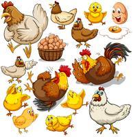 Hühnchen und frische Eier vektor