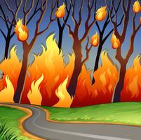 Katastrofplats av skogsbrand