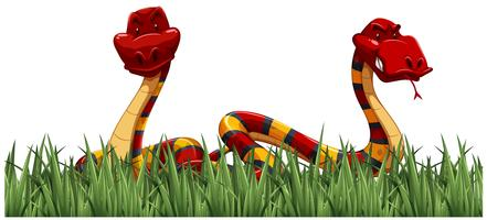 Två ormar på grönt gräs