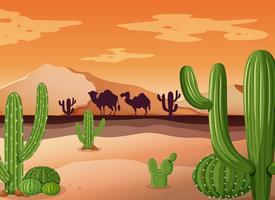 Ökenplats med kaktus och solnedgång
