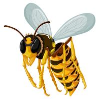 Einzelne Wespe, die auf weißen Hintergrund fliegt vektor