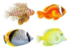 Vier fische vektor