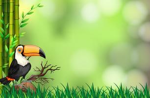 Tukan im Naturhintergrund