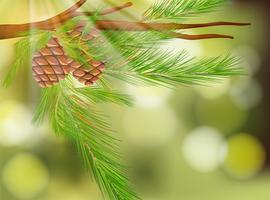 Pine Cone på naturlig grön bakgrund