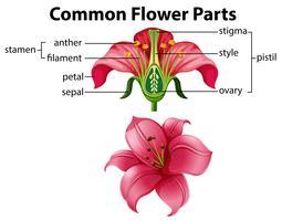 Wissenschaft allgemeiner Blumenteile
