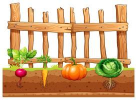 Sats av olika grönsaker