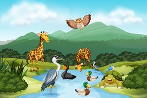 Många djur i naturen