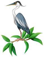 Ein Storch auf weißem Hintergrund vektor