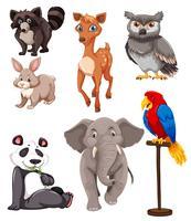 Set med söta djur