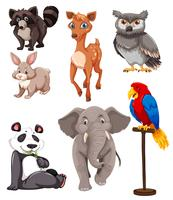 Set von niedlichen Tieren