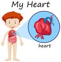 Diagramm der menschlichen Anatomie mit Jungen und Herzen vektor