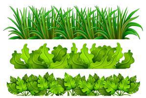 Eine Reihe von grünem Gras