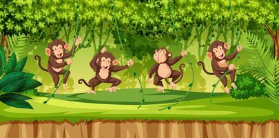 Affe im wilden Wald vektor