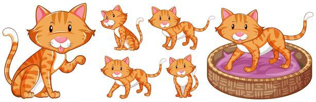 Gullig katt i olika handlingar vektor