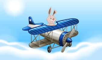 Kaninchen, das ein Flugzeug fliegt