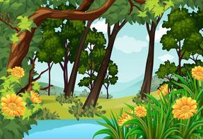 Skogsplats med träd och damm