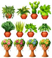 Pflanzen in Töpfen vektor
