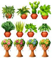 Set av växter i krukor