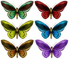 Monarchfalter in sechs verschiedenen Farbflügeln
