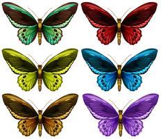 Monarkfjärilar i sex olika färgvingar vektor