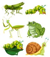 Olika typer av insekter i grön färg