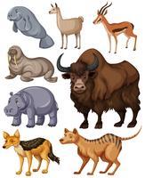 Olika slags vilda djur vektor