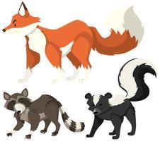 Olika vilda djur på vit bakgrund vektor