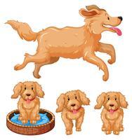 Hund och valpar med brun päls
