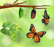 En fjäril livscykel vektor