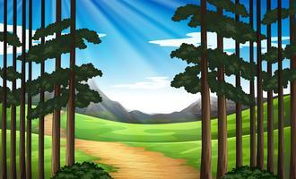 Bakgrundsscen med vandringsspår i skogen